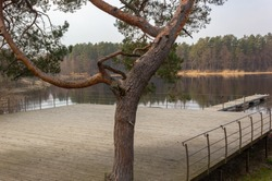 View of a wooden floor used as a boat dock and recreation area by the lake. Next to it is an old, curved pine, forest on the other side of the lake. Latvia