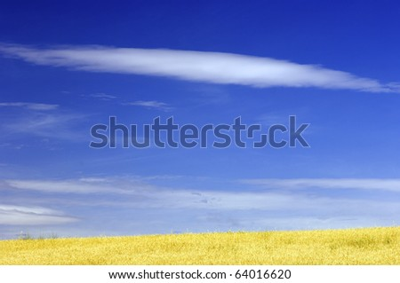 view of a yellow meadow with a spectacular sky white clouds