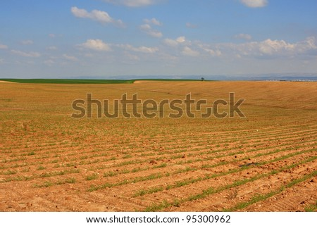 View of agricultural field at spring, Israel