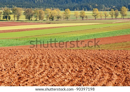 View of an autumn fields during the sunny day.