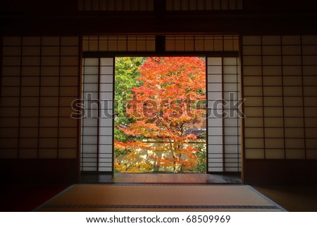 View of autumn Japanese maple garden in Kyoto,Japan