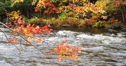 View of Beautiful foliage and rapids at Algonquin Provincial Park, Canada