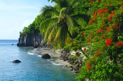 View of Belleville cove at Precheur Martinique . Red flamboyant and coconut palm on the beach .