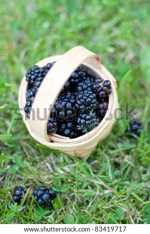 View of blackberries in a basket from above - stock photo