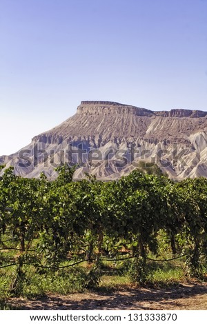 View of Book Cliffs from Palisades Colorado vineyard on clear summer day