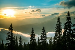 View of breathtaking dawn in coniferous forest. Silhouettes of fir trees with magical sky on background. Concept of beauty of nature.