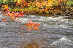 View of Bright leaves and rapids at Algonquin Provincial Park, Canada