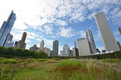view of Chicago skyscrapers from Grant Park