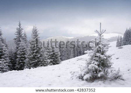 View of christmas tree through snow