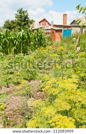 view of country garden on backyard in summer day