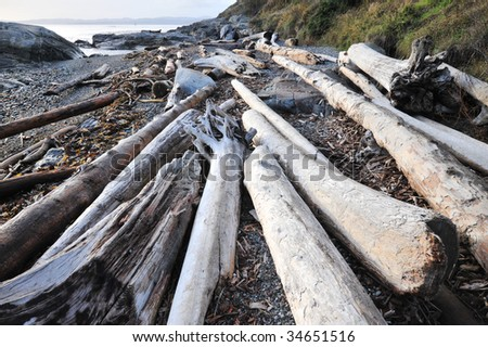 View of driftwood on shore in dusk, victoria, british columbia, canada - stock photo