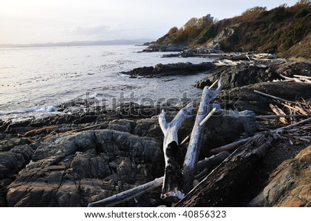View of driftwoods on shore in dusk, victoria, british columbia, canada