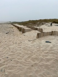 View of dune fencing to control wind erosion and encourage dune stability at the North Coast Natural Park. The Protected Landscape of Esposende Coast, Portugal.