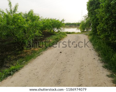 view of earthy road middle of green trees in the village