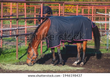 View of equestrian club with horses in equipment ready to horseback riding training, stables at horse club with different horses pasturing Photo stock ©