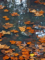 View of fallen leaves on the water of a pond in autumn, which create textures with warm colors on the water.