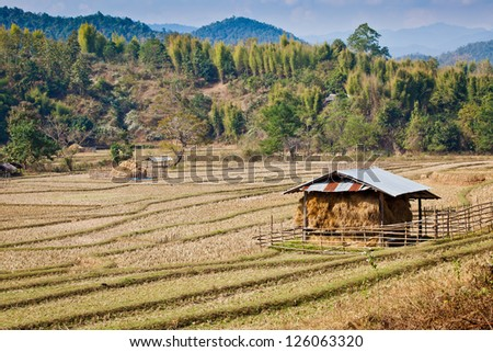 View of farm in norther of Thailand
