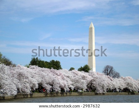 View of first cherry blossoms in washington DC, view of the Washington Monument
