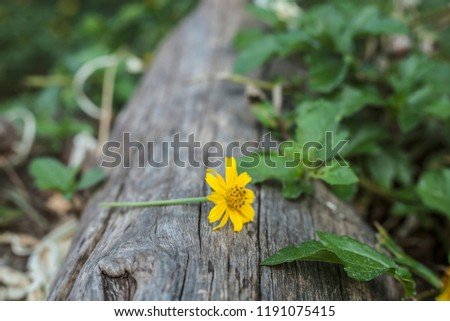View of flowers and grass  White foliage background and foliage. #1191075415