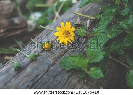 View of flowers and grass  White foliage background and foliage. #1191075418