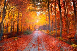 View of forest road with fallen leaves at the arrival of autumn. Landscape showing autumn with all its beauty. Uludag National Park, Bursa, Turkey.