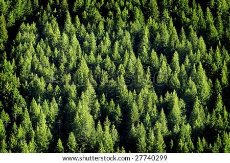 View of forrest of green pine trees on mountainside #27740299