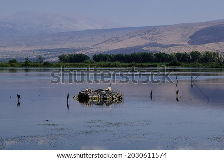 View of Hula Lake with a man-made tiny island for birds to land as seen from the floating bridge observation platform, Hula Nature Reserve, Hula Valley, Upper Galilee, Northern Israel, Israel.