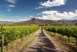 View of Hunter Valley vineyards, NSW, Australia