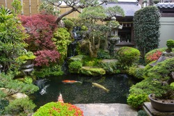 View of koi pond with large yellow and orange fish surrounded by a typical Japanese garden with stone lantern
