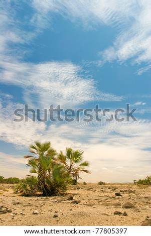 View of landscape with date palms in the background, Kenya