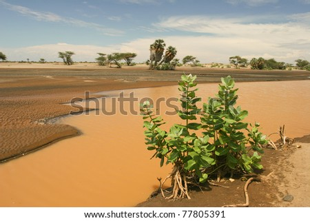 View of landscape with muddy river and date palm, Kenya