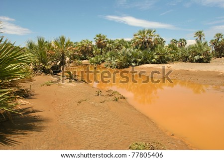 View of landscape with muddy river and date palms, Kenya