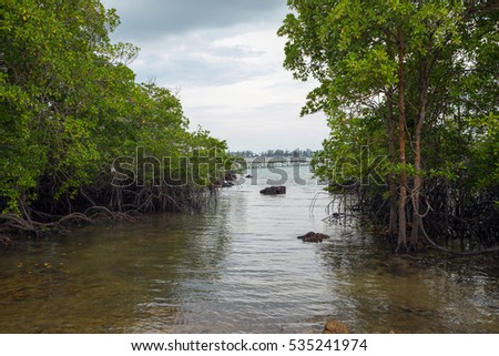 View of mangrove forest in Sibu island of Johor, Malaysia