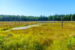 View of marshland in the Caribou Plain, Fundy National Park, New Brunswick, Canada
