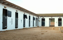 View of modern stables with horses.