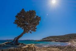 View of Monodenri beach in Lipsi (Leipsoi) island in Dodecanese, Greece. Tree at Monodendri beach in in Lipsi (Leipsoi) island