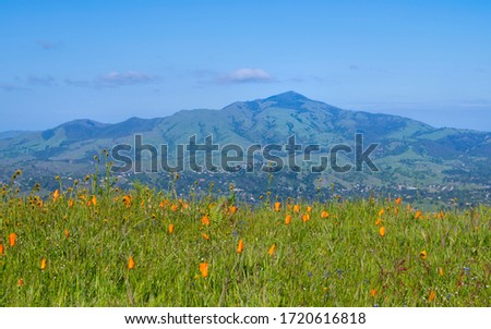 View of Mount Diablo with a field of orange poppies in the foreground Foto stock ©