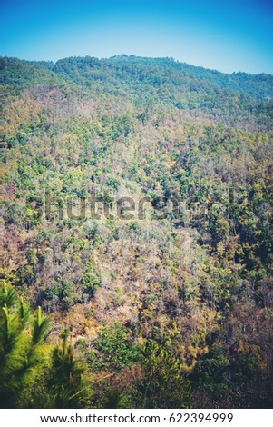 View of mountain forest landscape under sunlight in the middle of the summer with blue sky as a background.  #622394999