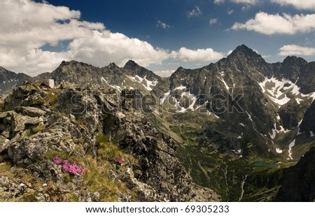 View of mountains with pink flowers in the foreground. Slovakian High Tatra Mounains.