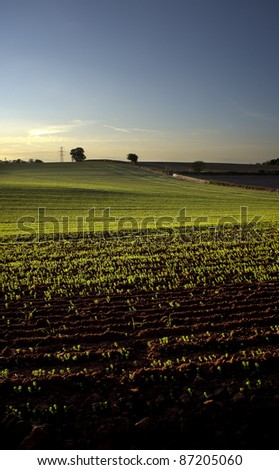view of new crop on farmers field at sunrise