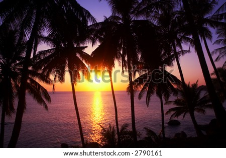 view of nice colorful tropic sunset through the palms - stock photo
