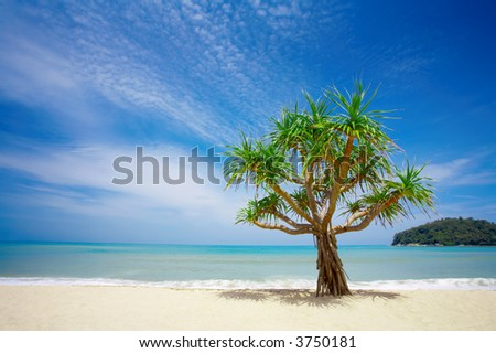 View of nice empty sandy beach with a mangrove tree in the middle