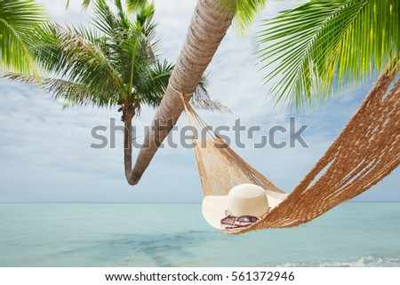 view of nice hummock with palms around in tropical environment #561372946