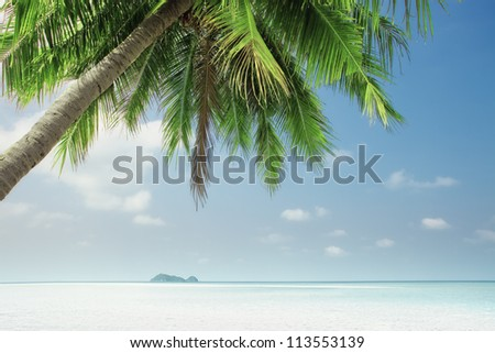View of nice tropical  beach  with one lonely palm