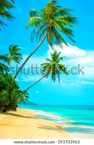 View of nice tropical beach with palms around