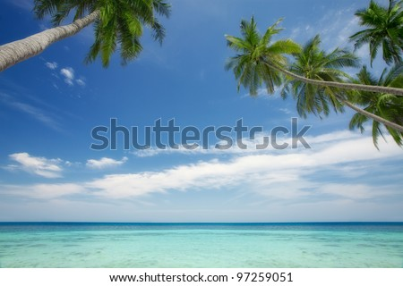 View of nice tropical  scene  with some palm