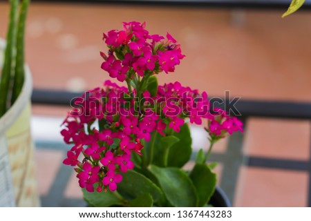 View of one of the flowers in m y garden Foto stock ©