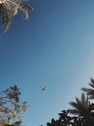 View of palm trees, blue sky and aircraft flying