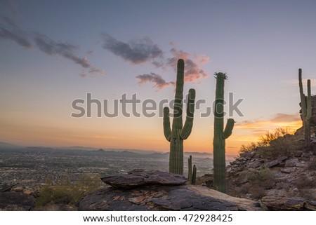 View of Phoenix with  Saguaro cactus at sunrise