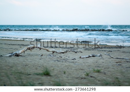 view of sea, sand beach with dry tree in the evening, sea tide, natural photo, wet sand and waves, Bibione, Italy
